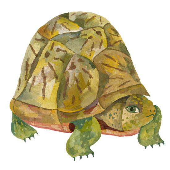 turtle gouache painting, tortuga, ilustración, illustration, pintura Elylu, Eliane Mancera ilustradora